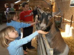 hardys animal farm lincolnshire | Thorganby Hall