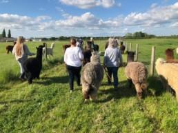 JandJ Alpacas experience | Thorganby Hall